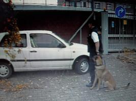 Foto 14 Tips Hunde Erziehung von Dog Team NRW -K9