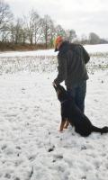 Foto 15 Tips Hunde Erziehung von Dog Team NRW -K9