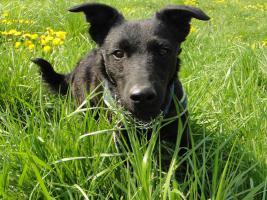 Foto 4 Toby - flinkes Wiesel im Hundepelz