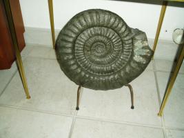 Foto 2 Tolle Fossilien aus Holzmaden