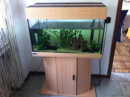 Tolles 200 L Eheim Aquarium zu verkaufen!!!!