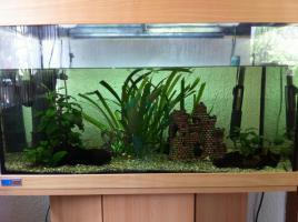 Foto 2 Tolles 200 L Eheim Aquarium zu verkaufen!!!!