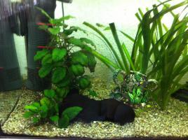 Foto 4 Tolles 200 L Eheim Aquarium zu verkaufen!!!!