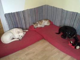 Foto 6 Tommy - Labradormischling aus dem Tierschutz