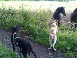 Foto 7 Tommy - Labradormischling aus dem Tierschutz