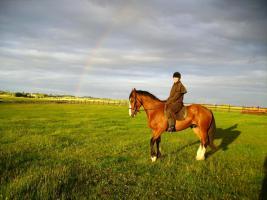 Foto 4 Trailreiten in Irland - Connemara