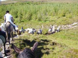 Foto 7 Trailreiten in Irland - Connemara