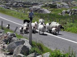 Foto 9 Trailreiten in Irland - Connemara