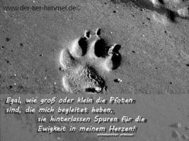 Foto 3 Trauerkarten für Tiere