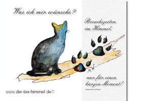 Foto 5 Trauerkarten für Tiere