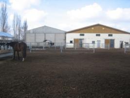Traumlaufstall für Ihr Pferd!