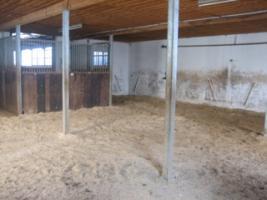 Foto 3 Traumlaufstall für Ihr Pferd!