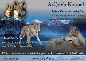 Tschechoslowakischer Wolfhund mit Herkunftsausweis