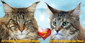Foto 2 *** Typvolle Kitten mit Papiere aus Championlinien ***