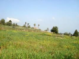 Foto 3 Unser Angebot nahe der Ortschaft /Markopoulou/Oropou bei Athen/Griechenland