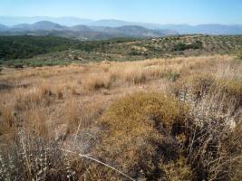 Foto 2 Unser Angebot nahe der Stadt Nafplion/Peloponnes/Griechenland