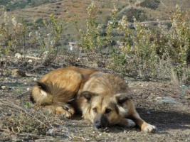Foto 4 Unsere Liebevolle Hundemama ''Anne'' sucht ein neues zu Hause