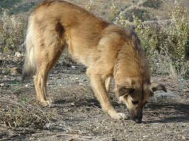 Foto 5 Unsere Liebevolle Hundemama ''Anne'' sucht ein neues zu Hause