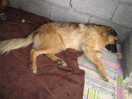 Foto 8 Unsere Liebevolle Hundemama ''Anne'' sucht ein neues zu Hause