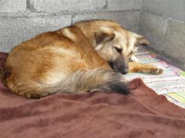 Foto 10 Unsere Liebevolle Hundemama ''Anne'' sucht ein neues zu Hause