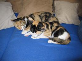 Foto 3 Unsere beiden Glückskatzen suchen ein neues Zuhause!