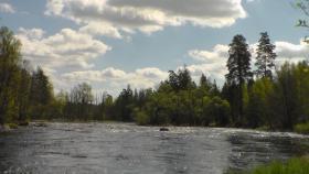 Foto 3 Urlaub mit Hund. Ferienhaus am Wasser ohne Nachbarn in Schweden