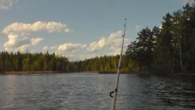 Foto 5 Urlaub mit Hund. Ferienhaus am Wasser ohne Nachbarn in Schweden