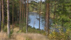 Foto 6 Urlaub mit Hund. Ferienhaus am Wasser ohne Nachbarn in Schweden