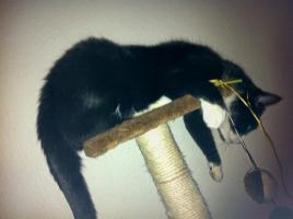 Urlaubs Katzenbetreuung in einem liebevollen Heim