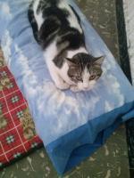 Valentina, Katze, 2 Jahre, ein Leben ohne Liebe