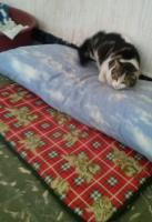 Foto 4 Valentina, Katze, 2 Jahre, ein Leben ohne Liebe