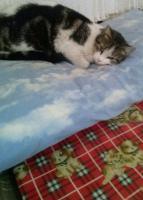 Foto 5 Valentina, Katze, 2 Jahre, ein Leben ohne Liebe