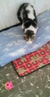 Foto 6 Valentina, Katze, 2 Jahre, ein Leben ohne Liebe