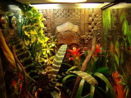 Foto 3 Vergebe Pfauenaugen Taggeckos