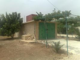 Foto 2 Verkaufe Olivenplantage in Jordanien 55.000qm mit 200 qm Haus