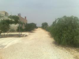 Foto 8 Verkaufe Olivenplantage in Jordanien 55.000qm mit 200 qm Haus