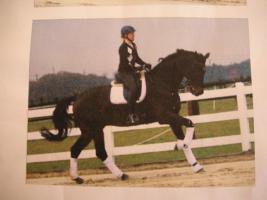 Foto 2 Verkaufe Vielseitigkeitspferd