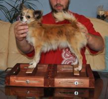 Verkaufe Welpen Chihuahua mit Papiere (FCI)