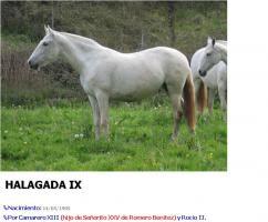 Verkaufe exelente PRE // Andalusier Sute