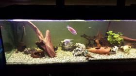 Verkaufe komplettes 1000 L Aquarium