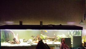 Foto 3 Verkaufe komplettes 1000 L Aquarium