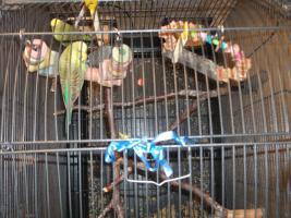 Vogelkäfig mit 3 Wellensttiche