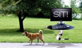 Während Ihrer Arbeit oder Ferien Sie können Ihre Hund auf mich verlassen
