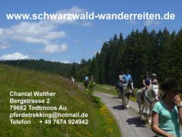 Wanderreiten 2 Tagestouren für Erwachsene Schweiz Deutschland Frankreich