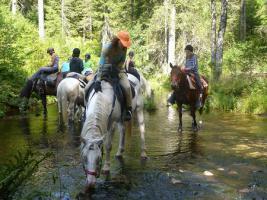 Wanderreiten für Erwachsene, Entschleunigen in Todtmoos Au, Pferdetrekking, Reitferien