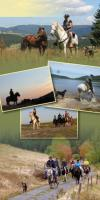 Wanderreiten für Erwachsene - Pferdetrekking - Reiturlaub im Schwarzwald