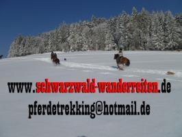 Foto 5 Wanderreiten für Erwachsene - Pferdetrekking - Reiturlaub im Schwarzwald