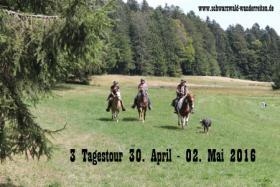 Foto 26 Wanderreiten für Erwachsene - Pferdetrekking - Reiturlaub im Schwarzwald