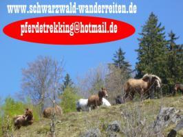 Foto 43 Wanderreiten für Erwachsene - Pferdetrekking - Reiturlaub im Schwarzwald