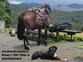 Foto 9 Wanderreiten für Erwachsene - Pferdetrekking - Reiturlaub im Schwarzwald
